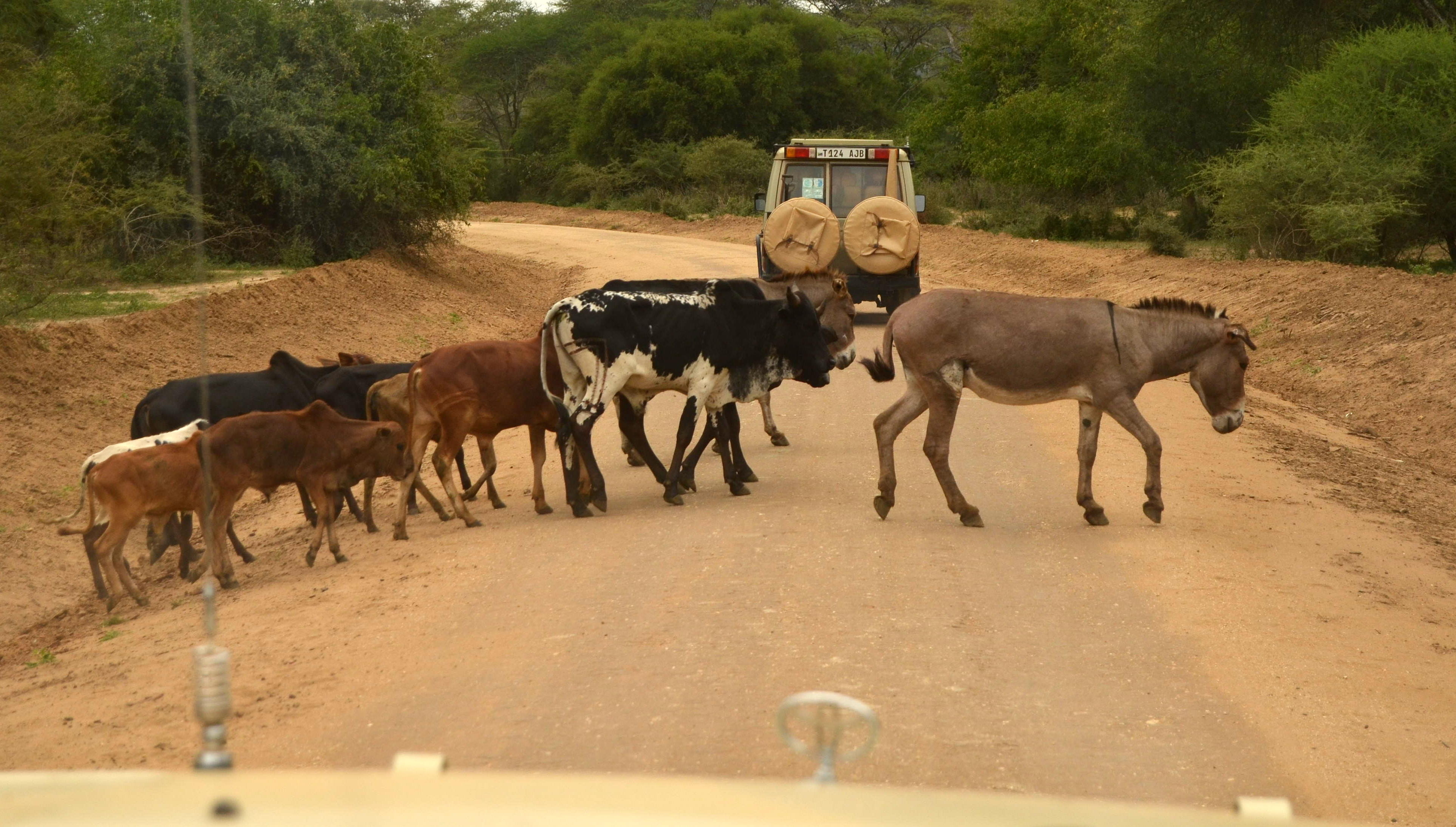 Dopravní zácpa někde uprostřed Tanzanie.