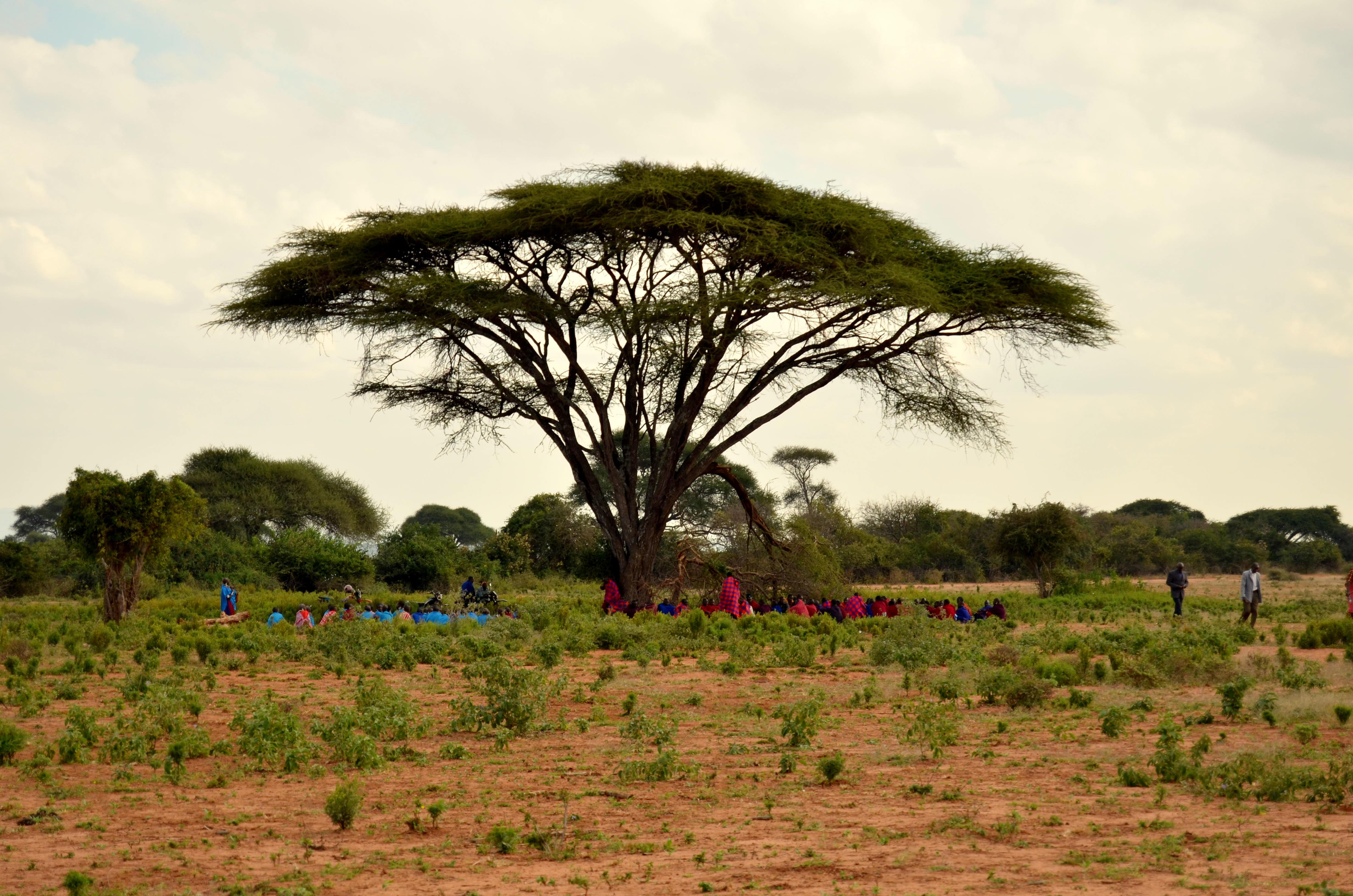 """Rozložitý akát nebo-li """"deštníkový strom"""" je jedním ze symbolů Tanzanie. Vidět ho můžete na každém kroku."""